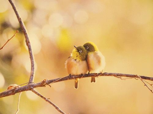 ブレッソンも驚く決定的野鳥写真