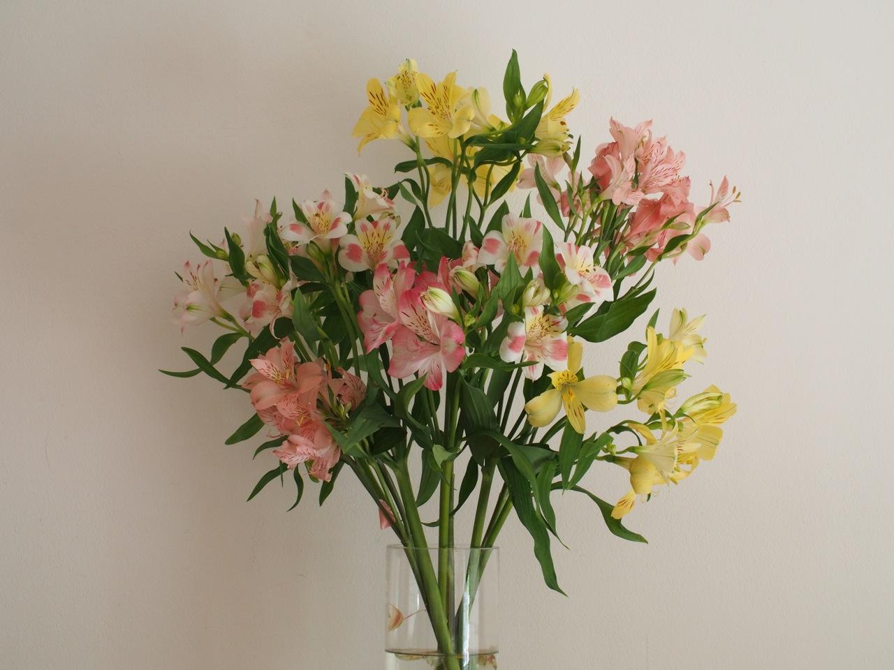 年じゅう咲いている百合水仙という花