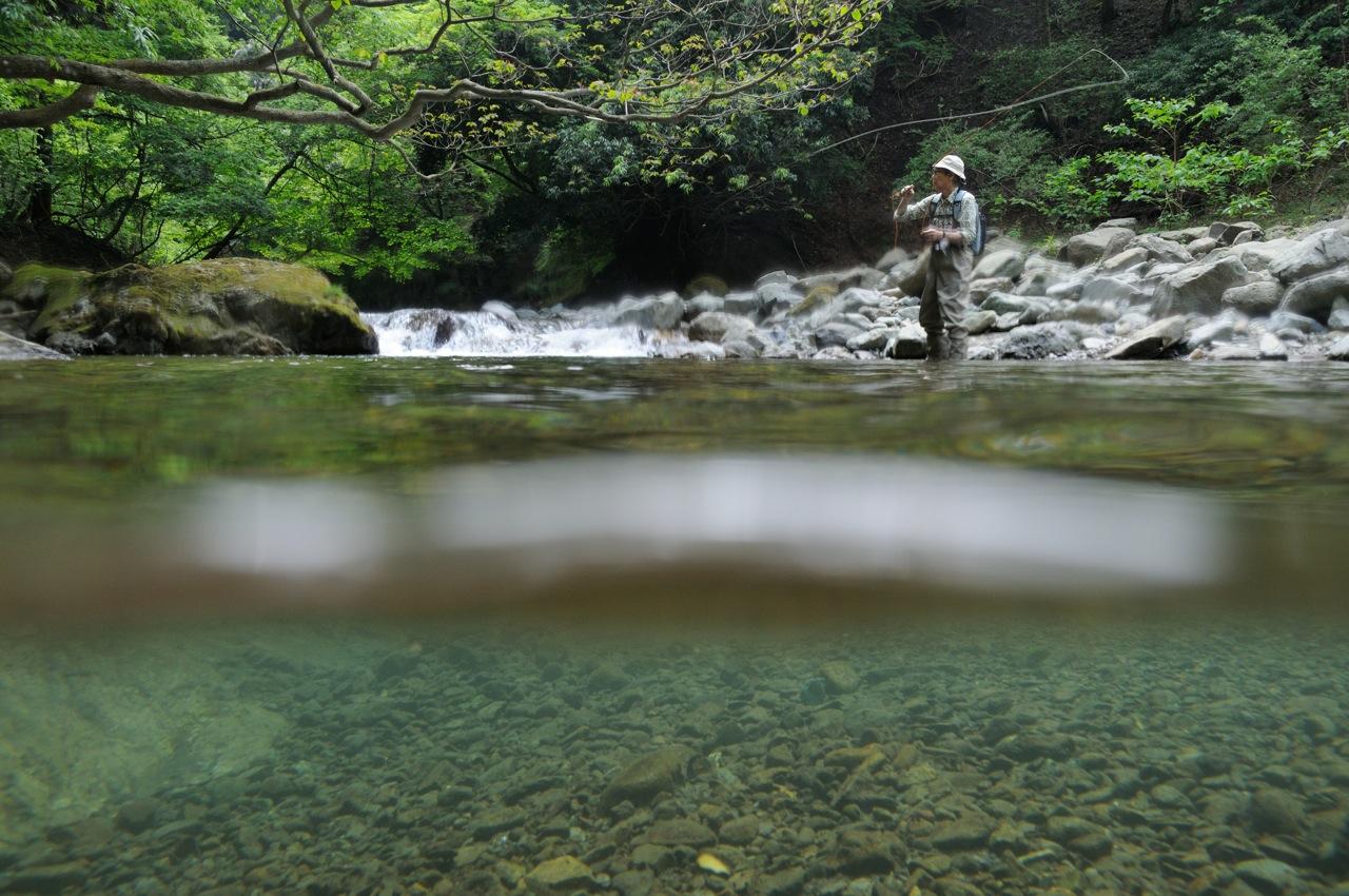 新緑の渓でイワナ釣り