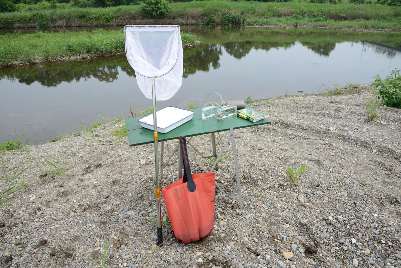 スイレン鉢に入れるモエビ、水生昆虫の採集