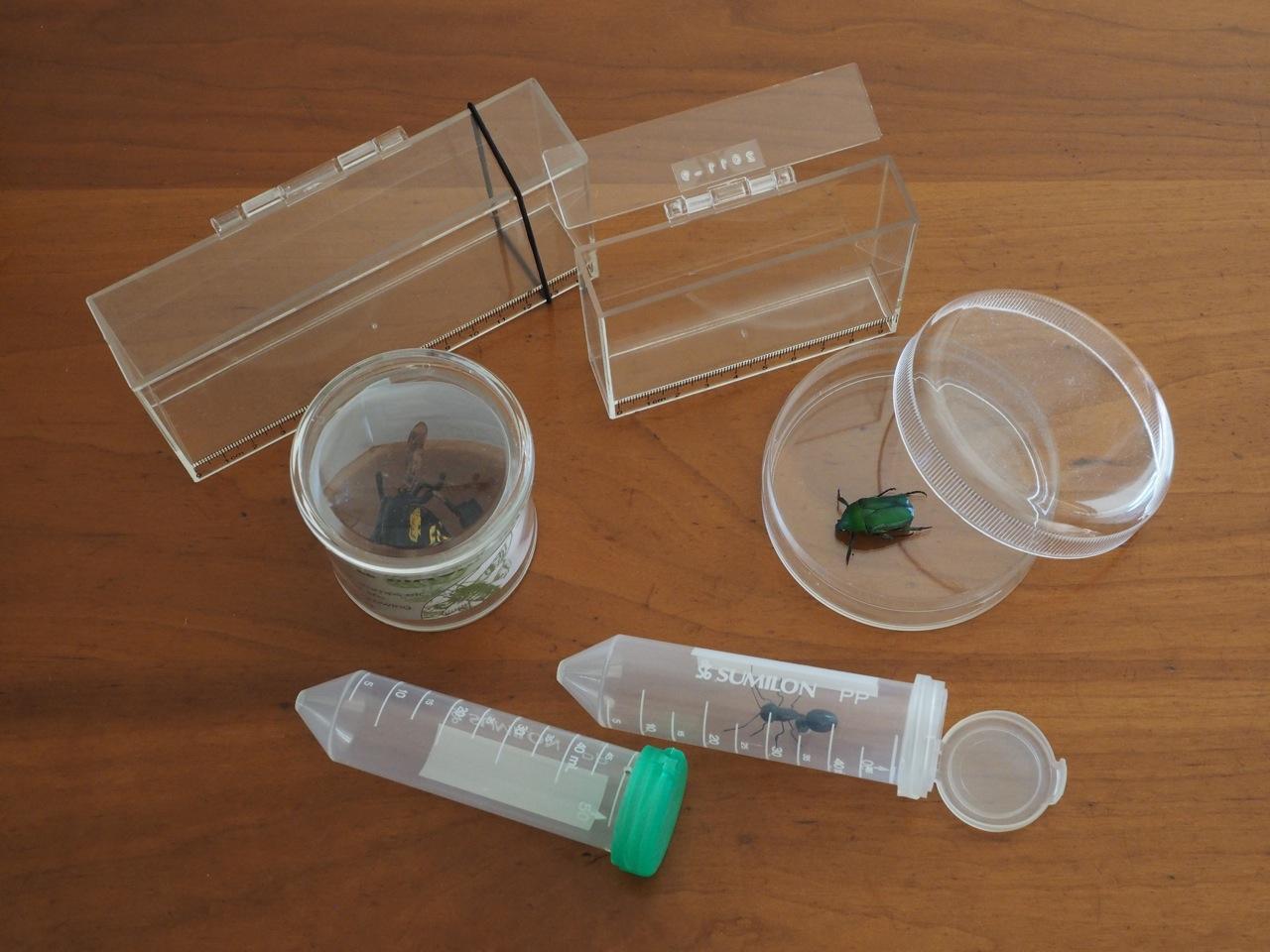 小動物観察用の携帯プラスチックケース