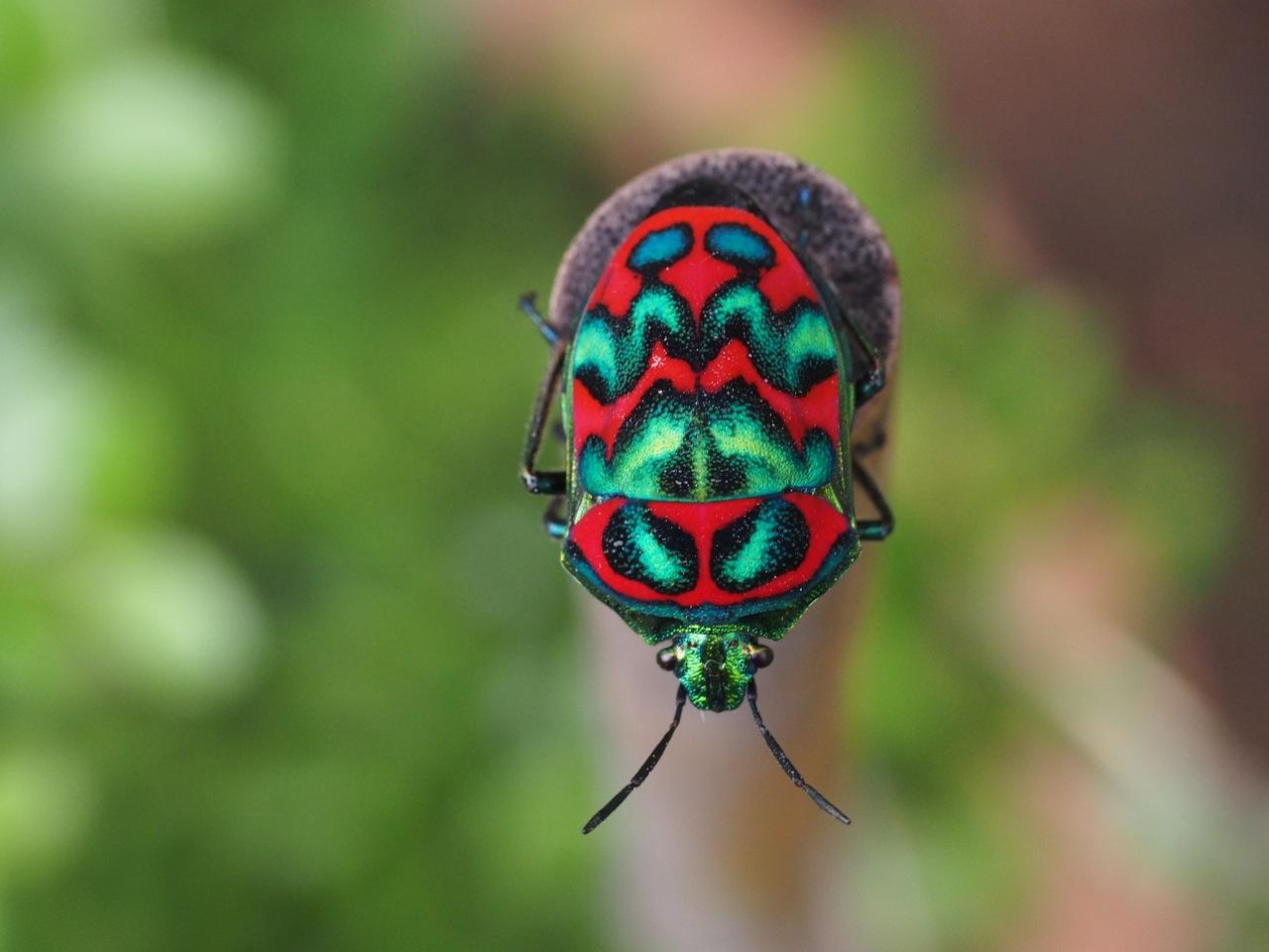 金、赤、紫、緑を散りばめた宝石のような虫