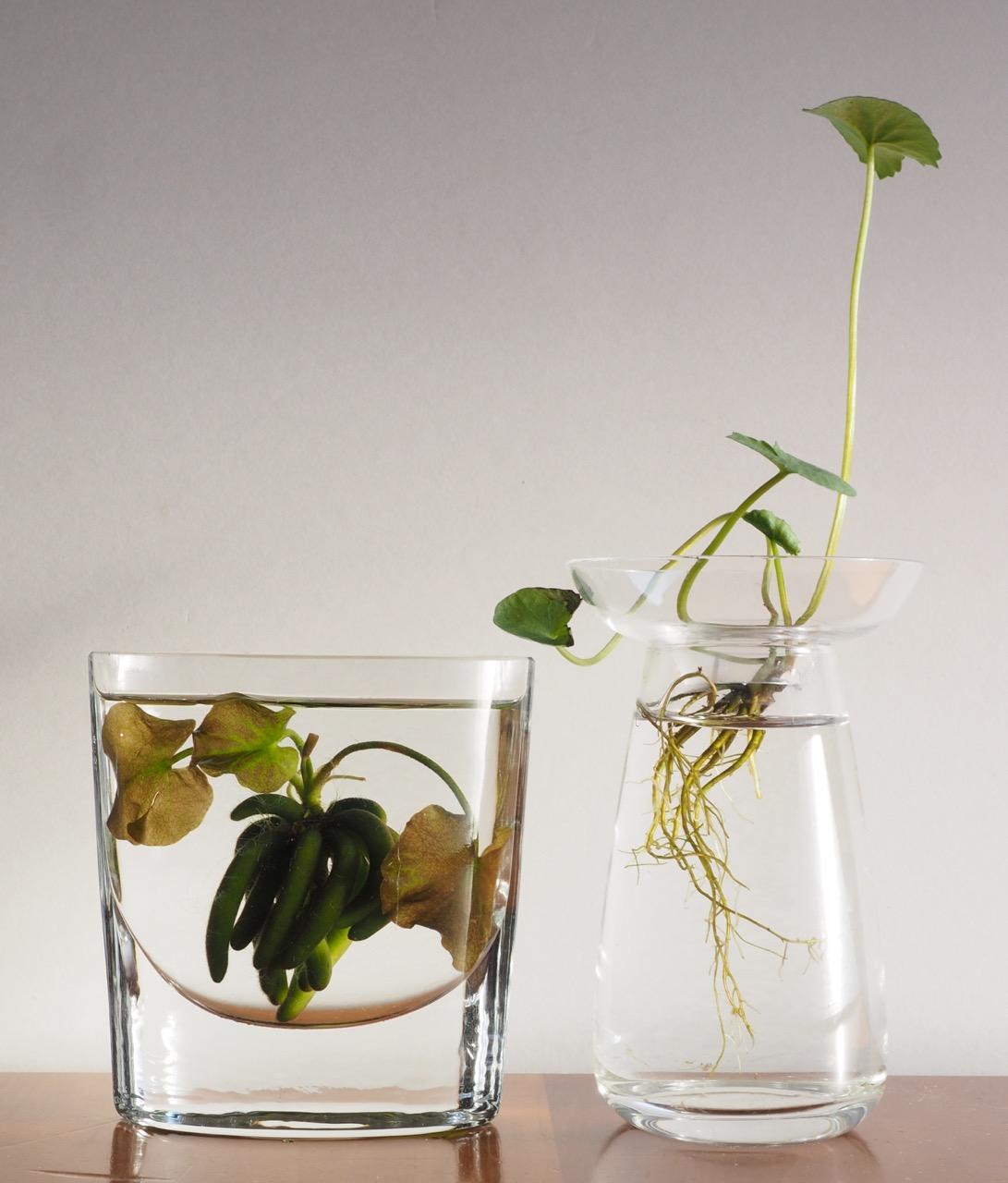 根の姿も楽しめる透明な花瓶