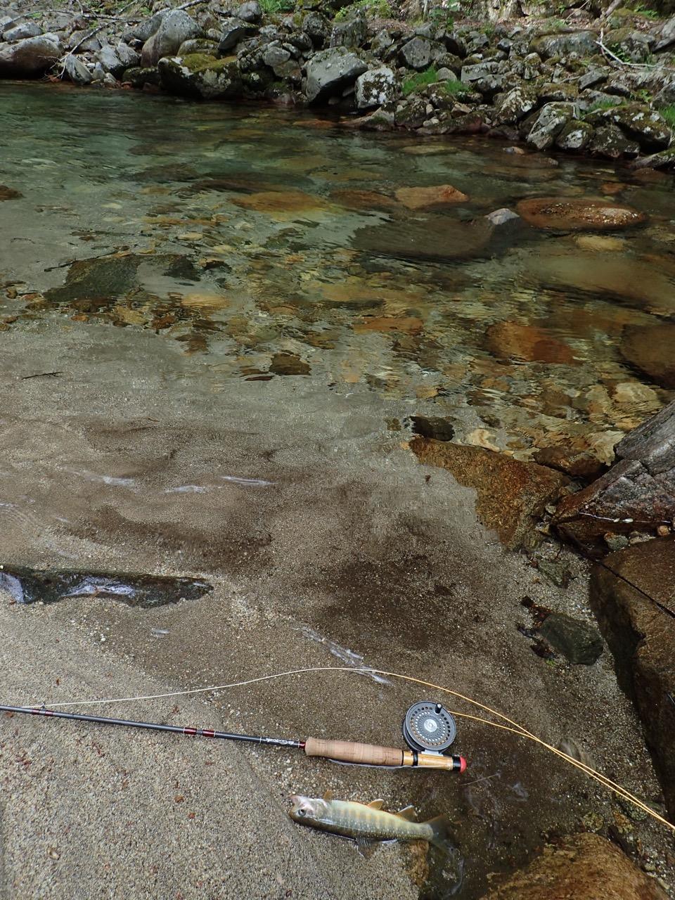 梅雨入り前に甲州で岩魚釣り