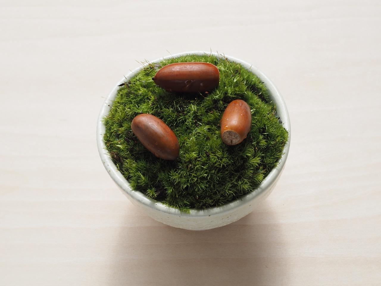 発芽を観察して楽しむ鉢・ドングリポット