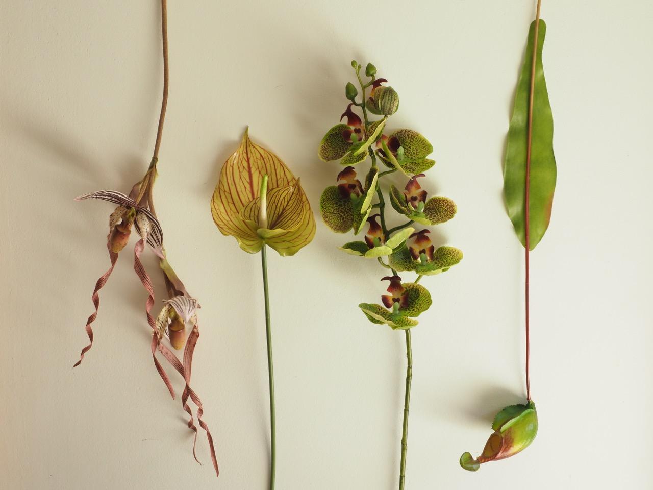「もう一つの真実」という植物があります