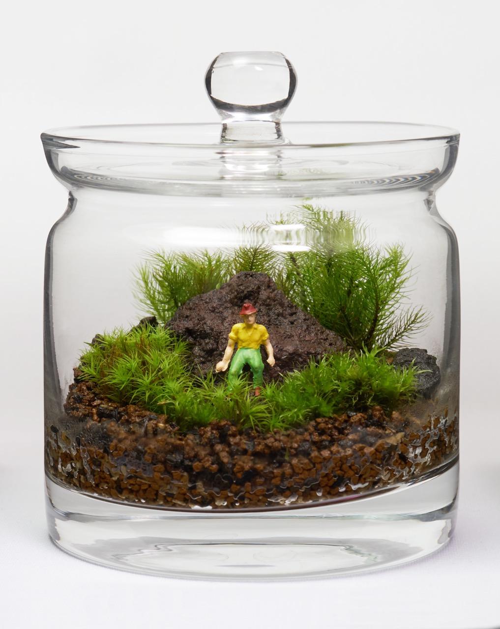 ガラス瓶の中の自然、苔テラリウム