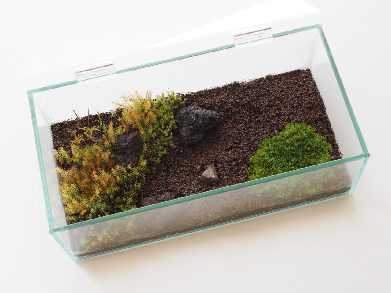 「苔の箱庭」用の小さなガラス水槽探し