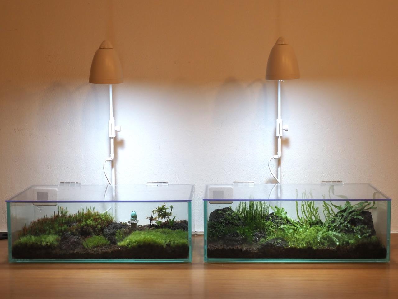 陽の当たらぬ部屋で緑を楽しむ植物ライト